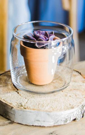 wypożyczalnia wazonów i słoików